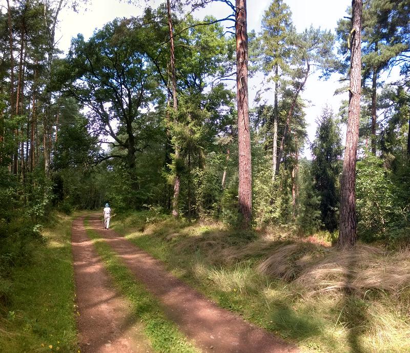 WP_20140815_11_42_07_Panorama
